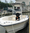 Boat with Dog